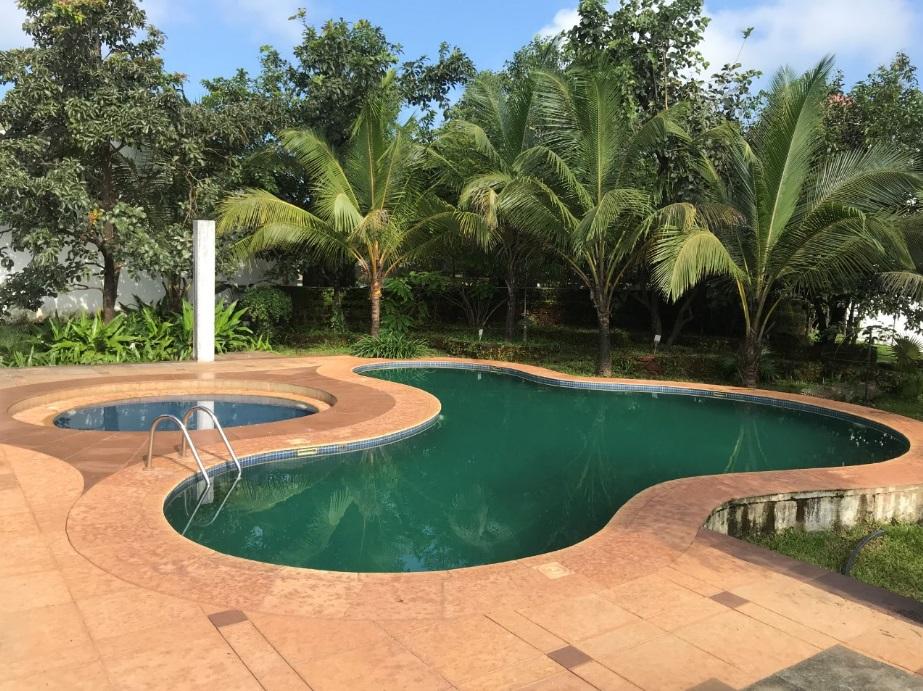 the pool fern samali
