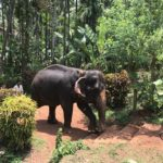 elephant goa spice farm