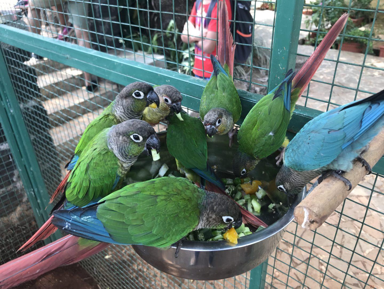 petting zoo india