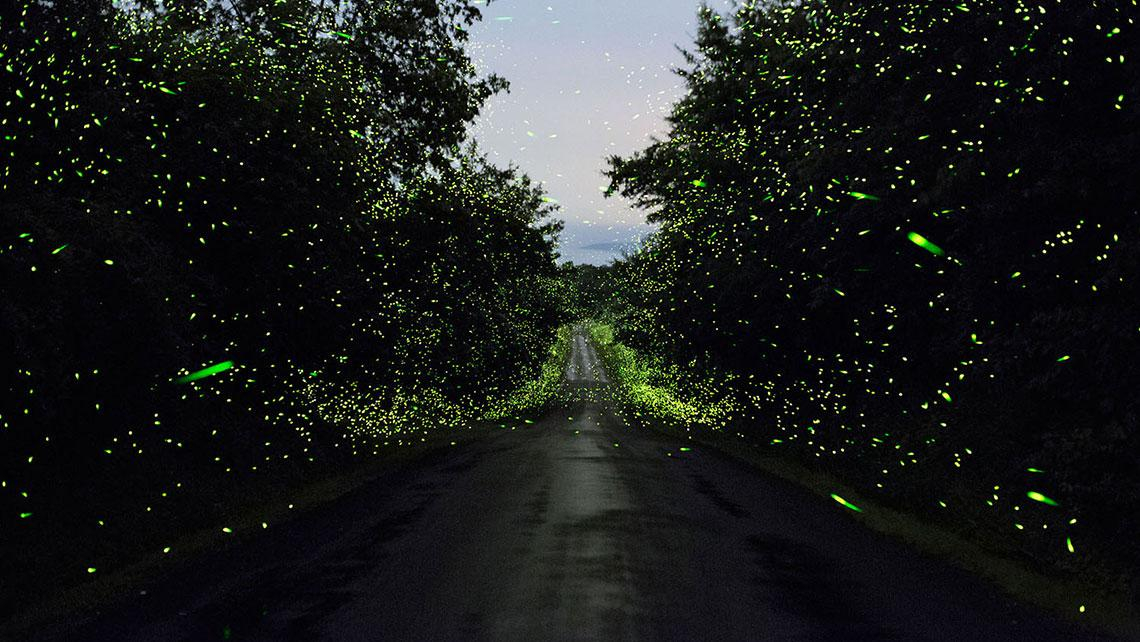 The Time I Saw Ten Thousand Fireflies at Bhandardara