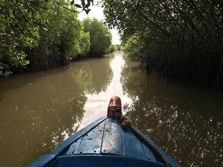 mangroves tamil nadu
