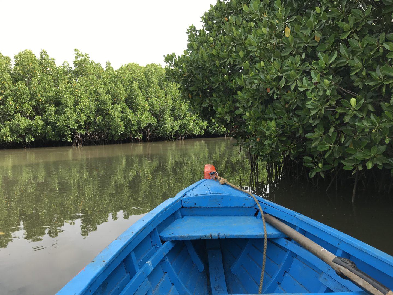 pichavaram open water