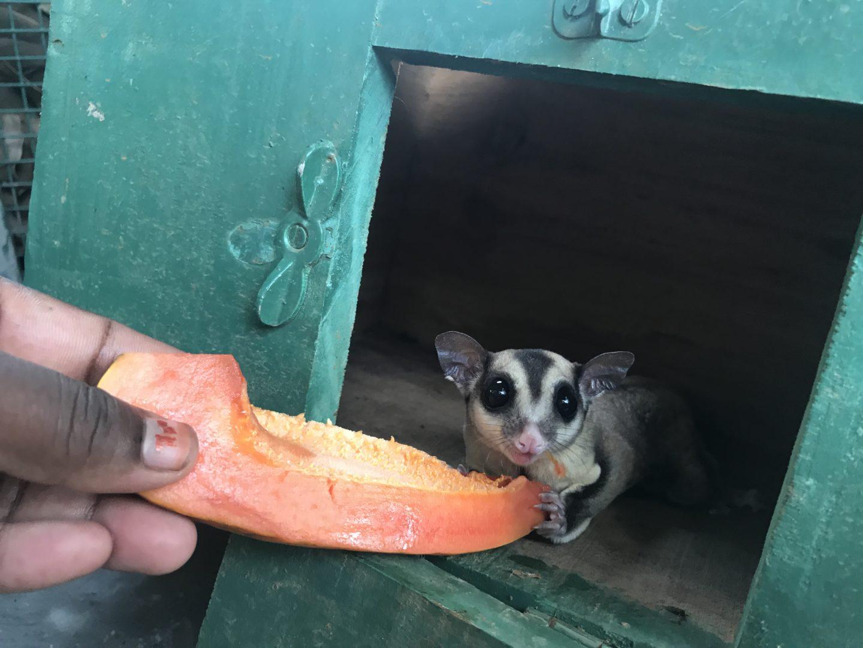 manas resort petting zoo