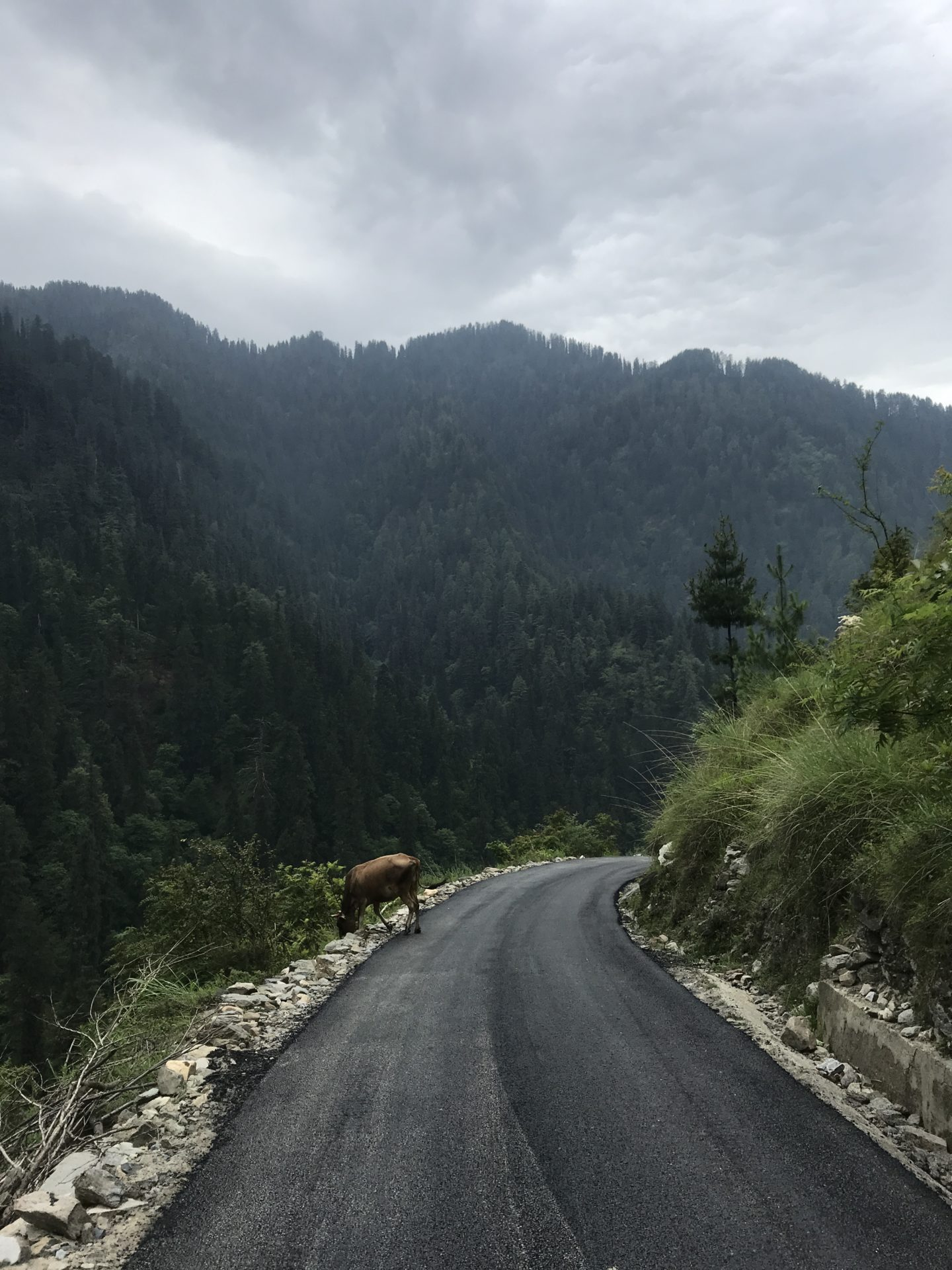 horse himachal