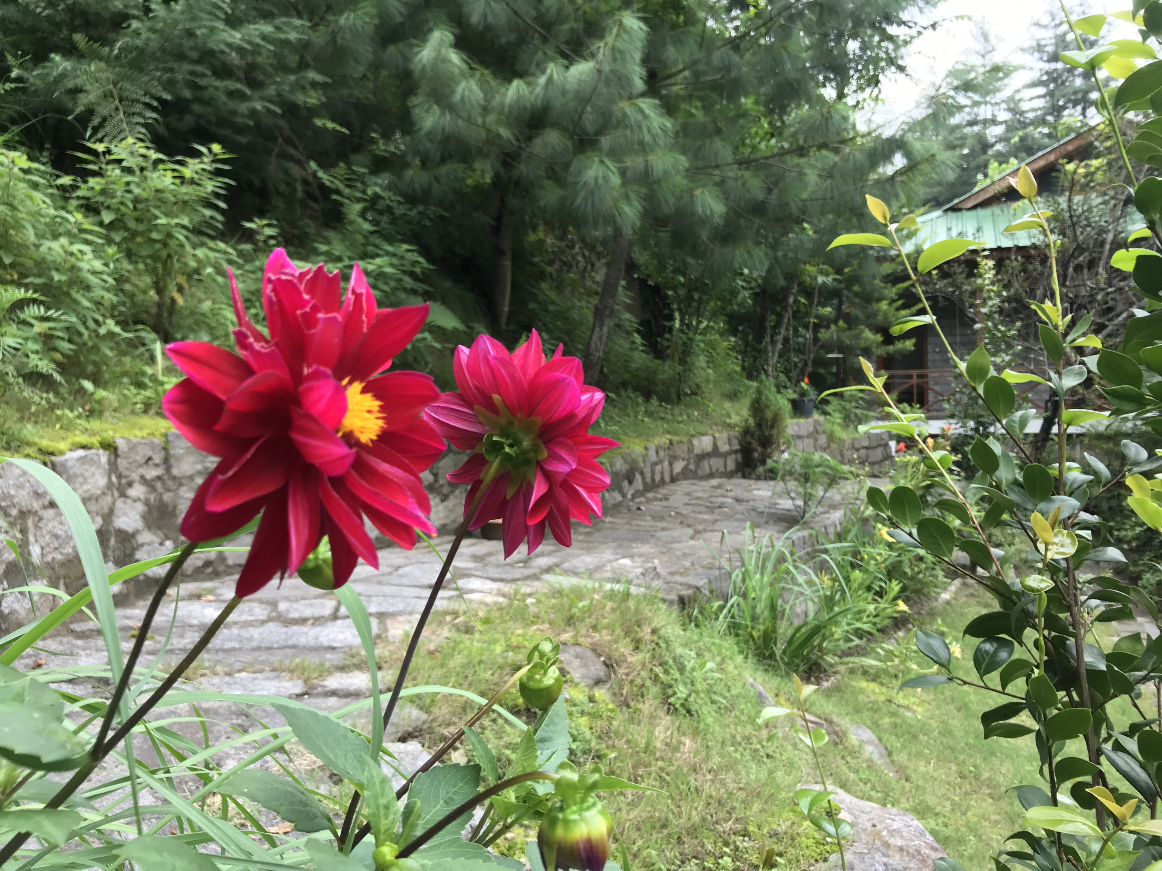 Flowers At Tall Trees Resort That Goan Girl