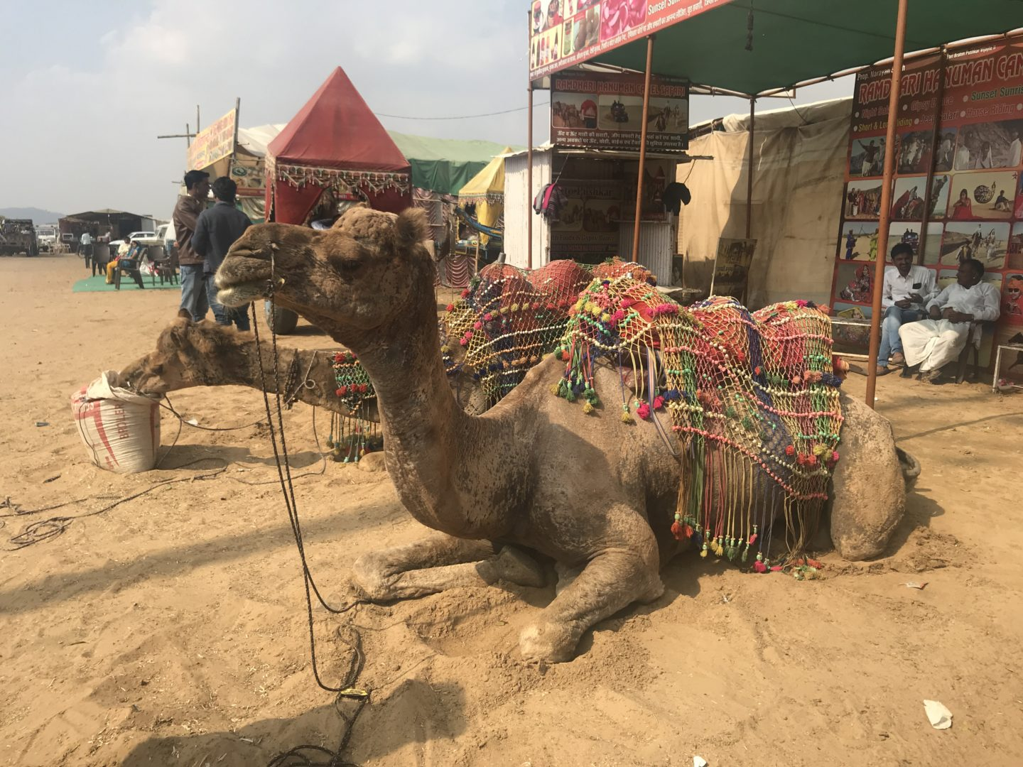 A FIRST TIMER'S GUIDE TO PUSHKAR, RAJASTHAN